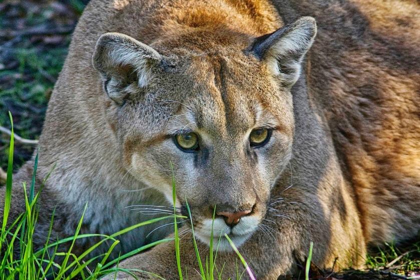 Cougar alert here.