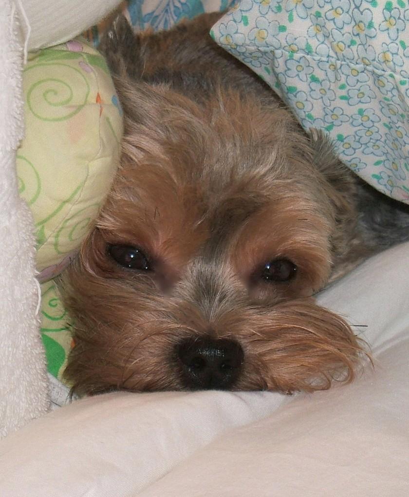 Little dog pillow photo