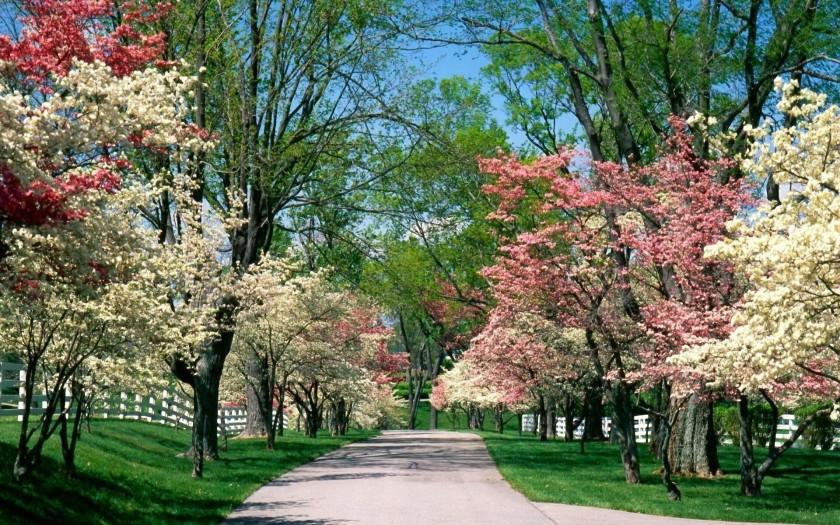dream-spring-2012-the-gift-of-springtime_1920x1200_96813